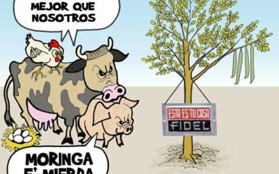 El regreso de la moringa, burla a los cubanos