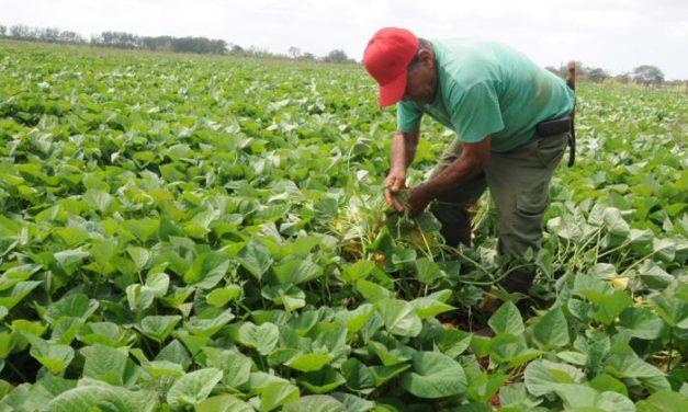 ¿Sabías que Cuba en 1957 era un gran exportador de alimentos y hoy tiene que importar el 80%?