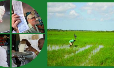 Falta de arroz en Cuba es otra prueba del fracaso agrícola del socialismo cubano