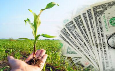 MONOPOLIO GELMA: ¿Cómo afecta a los cubanos la dolarización de los insumos agrícolas?