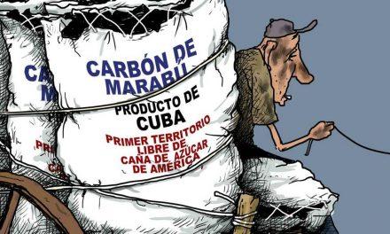El marabú no se come, pero les da divisas a los militares cubanos