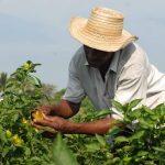 Hostigamiento a campesinos agrava hambre en Cuba