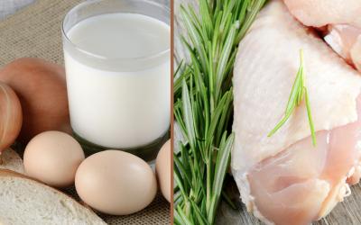 Pollos, huevos y leche en Cuba, los más caros del mundo