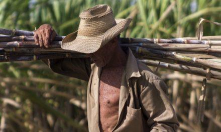 Cuba produjo este año menos azúcar que en 1894
