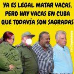 Memes de Cuba: de vacas que no se pueden matar